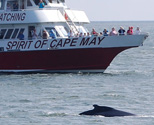 Cape MAY Whale Watcher Tickets Memorial Day Events Cape May